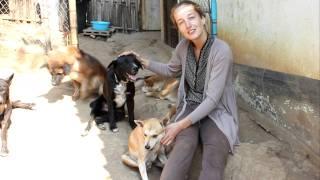 Adopt A Thai Street Dog...