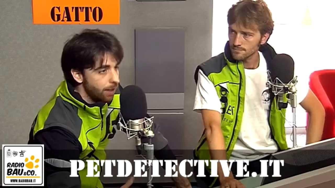 Pet Detective a Radiobau
