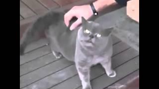 Hahahaha Begini Nih Kalau Kucing Ketawa Kkkkkk