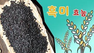 흑미효능 안토시아닌이 함유된 검정쌀의효능을 알아보겠습니…
