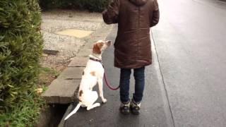 ドッグスクールのおかげでメグが引っ張ることなくお散歩出来るようにな...