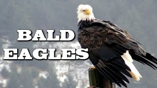 Bald Eagle Mascot School List