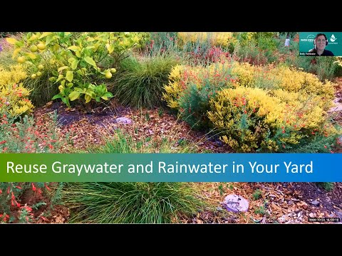 Understand How to Reuse Graywater and Rainwater in Your Yard