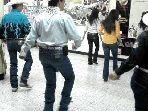 Baile Country: School Dancer Country Music Chihuahua