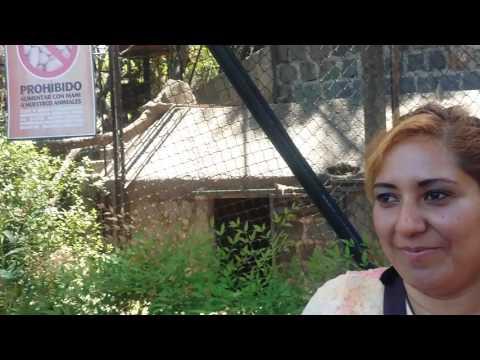 Visita al ZoológicoNacional deChile,Santiago