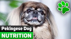 Pekingese Dog Nutrition - Toxic Foods You Should Never Give To Your Dog. What To Eat And Not To Eat?
