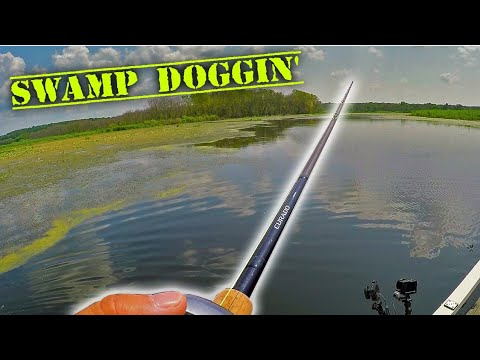 SWAMP Fishing - Chasing State Record DOGFISH Ep. 3 2019