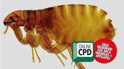 WEBINAR: Professional flea control