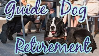 All About Guide Dog Retirement