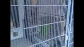 Приют для кошек и собак в Германии