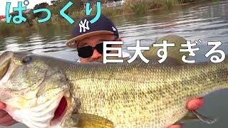 でたかっ!?世界記録!! 琵琶湖ボートバス釣り感動巨編