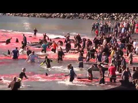 'Europe's last barbarians': Faroe islands bloody whale slaughter (RT Documentary PROMO)