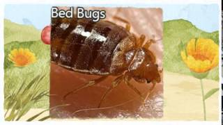 Official Pest Control Citrus Heights CA 916-226-4836 Bed Bugs Treatment
