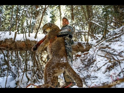 Archery Mountain Lion Hunt~ My First Cougar