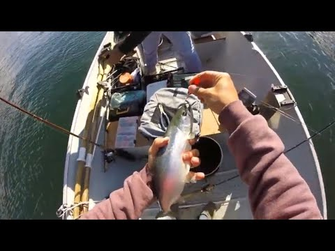 Kootenay Lake Kokanee Fishing  British Columbia - PLUS BONUS SPECIES!