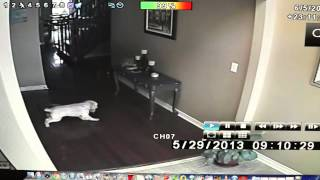 Ghosts in my house!!! [REAL GHOST FOOTAGE]