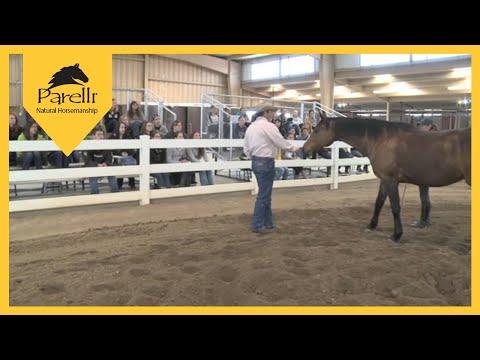 Pat Parelli  Equine Behavior Lecture at Colorado State University Part 1