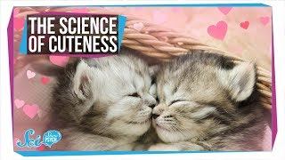 The Surprising Benefits of Watching Cute Cat Videos