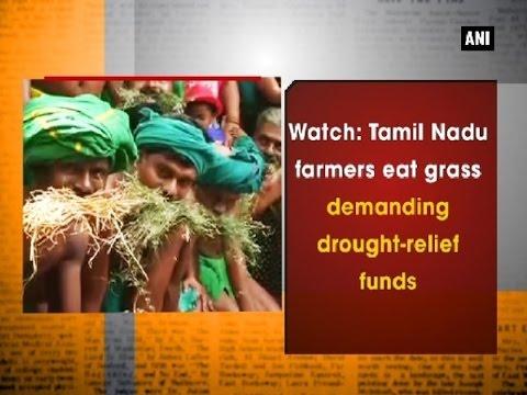 Watch: Tamil Nadu farmers eat grass demanding drought-relief funds - Delhi News