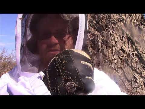 Arizona Desert Bees - March 2016