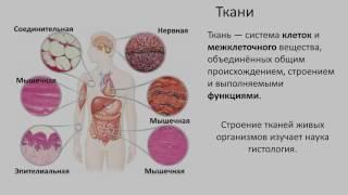 1.Ткани строение и функции (8 класс) биология, подготовка к ЕГЭ и ОГЭ