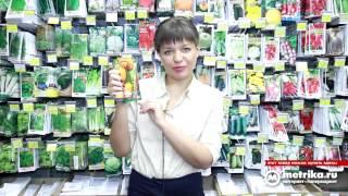 видео Голландские профессиональные семена тыквы оптом