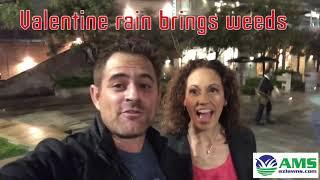 Valentine's Day Rain Brings Weeds to Phoenix, AZ!