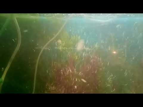 рыбки 2
