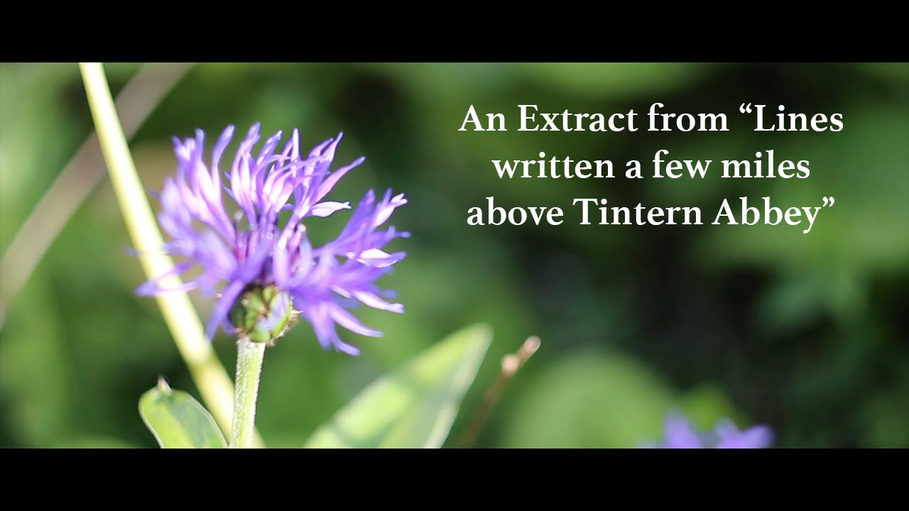 analysis of themes and symbols in the poems lines composed a few miles above tintern abbey by willia