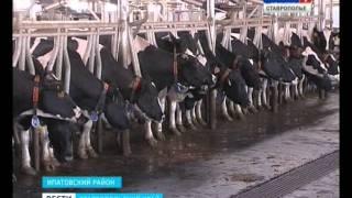 видео МИНИСТЕРСТВО ФИНАНСОВ СТАВРОПОЛЬСКОГО КРАЯ Ставрополь