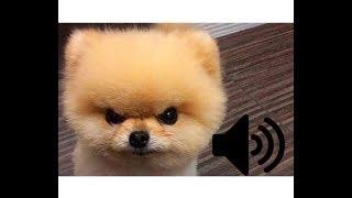 🔊 Топ 10 звуков которые бесят вашу собаку - прикол над своей собакой!