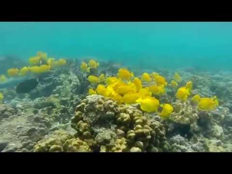Snorkeling at Kahaluu Beach Park, Kailua - Kona, HAWAII