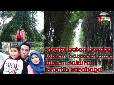 wisata-taman-harmoni-hutan-bambu-keputih,-wisata-bunga-sakura-surabaya