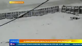 В Новосибирской области в середине мая выпал снег