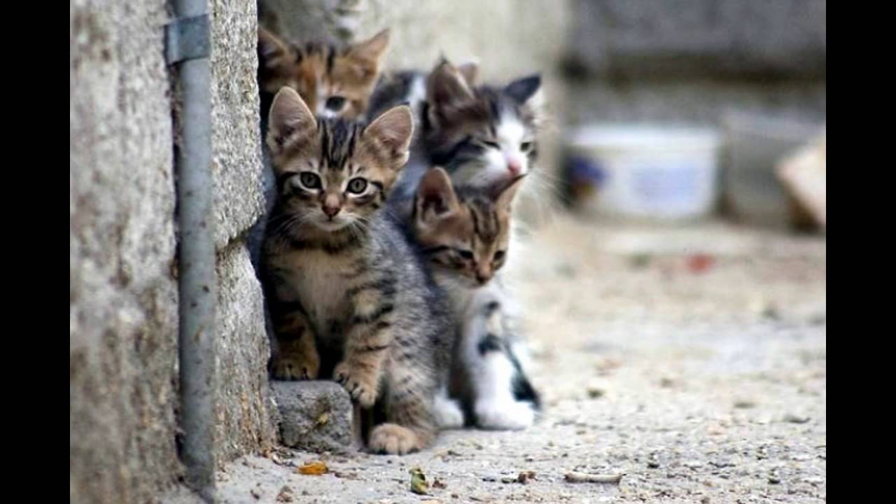 "Результат пошуку зображень за запитом ""бездомні коти"""