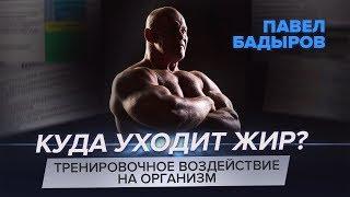 Жиросжигающая тренировка - Павел Бадыров теоретическая часть
