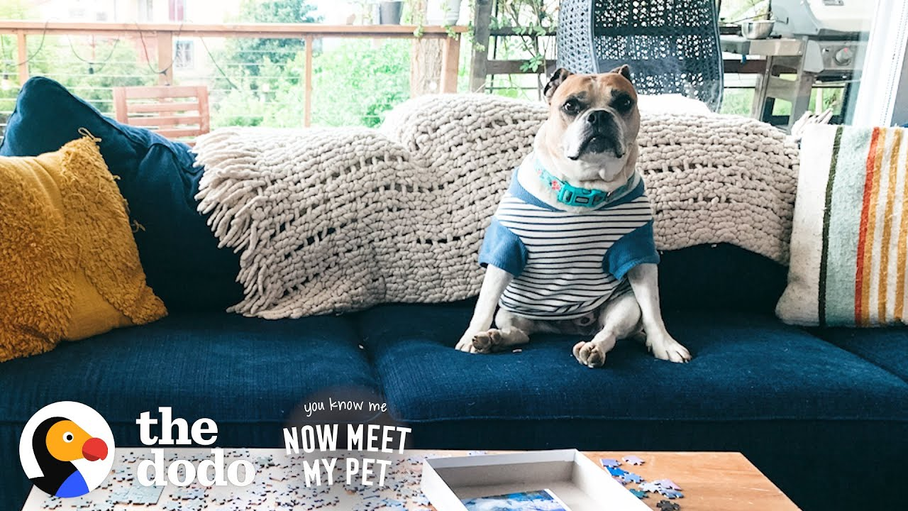 Anxious Rescue Dog Wears Shirts To Make Her Feel Safe | The Dodo You Know Me Now Meet My Pet