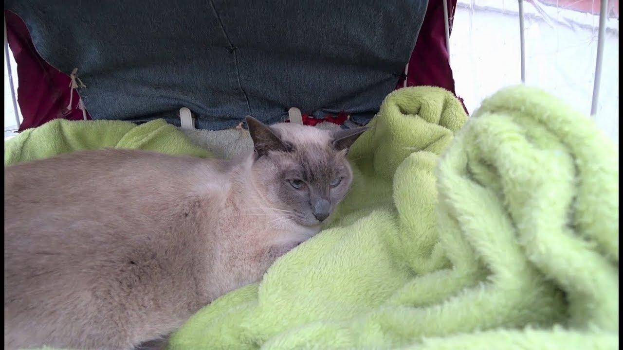 Sad News My Cat Yozora Suddenly Died From Colon Cancer Youtube