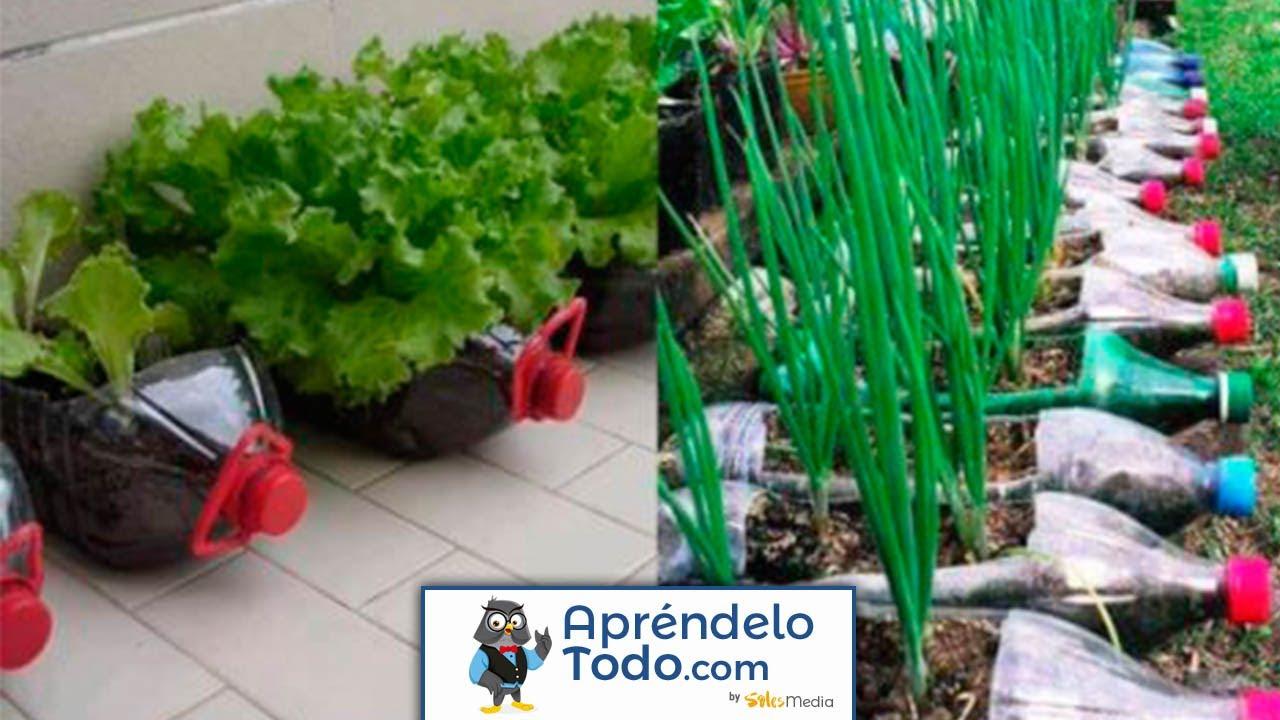 12 alimentos que puedes cultivar en botellas de pl stico for Casas de plastico para jardin mexico