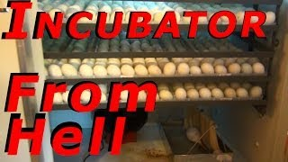 Dezhou Runde Metal Company Made In China Egg Incubator Stops Working #45 Hatching Ducklings Ducks