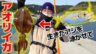 #2 アジを泳がせてアオリイカを釣る方法!!