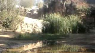 telmcen chetwan