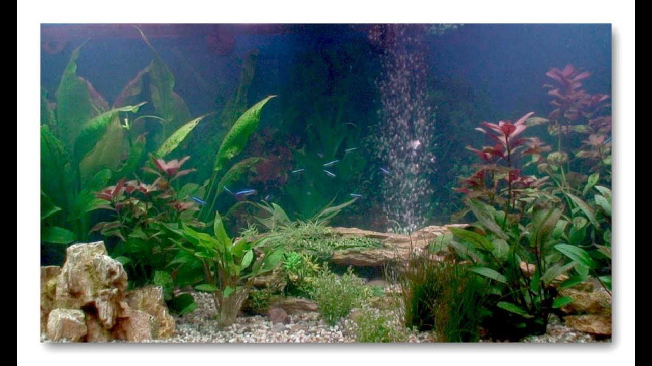 Aquarium fish tank cycle - Aquarium Fish Tank Cycle