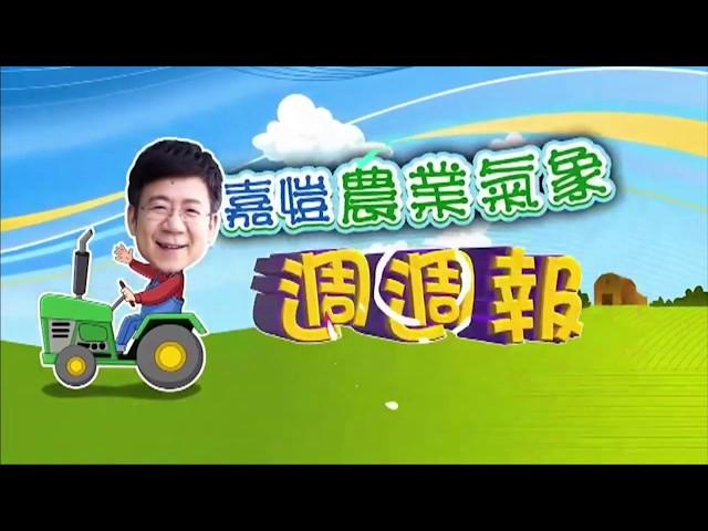 2020.05.25─嘉愷農業氣象週週報