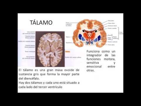 Anatomia y funcionamiento del sistema nervioso central