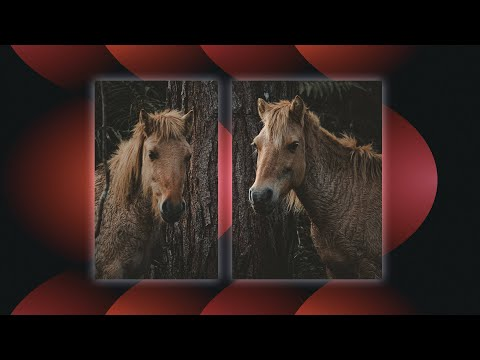 How To Create A Split Screen Effect In Adobe Premiere Pro