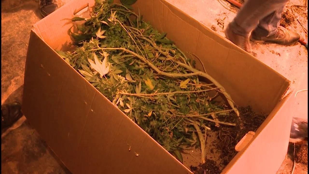 Конопля вологодская область где растет конопля в нижегородской области