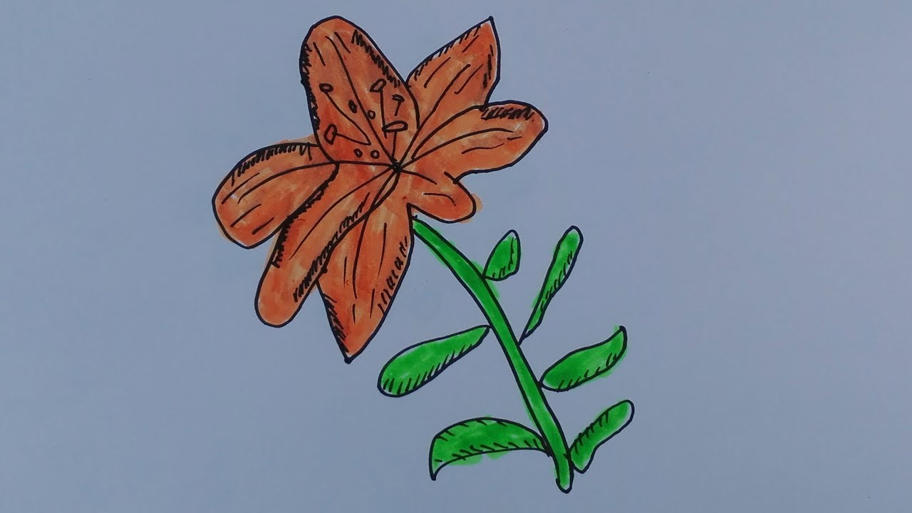 How to draw lily padsdraw a lily pad flower step by stepdraw a