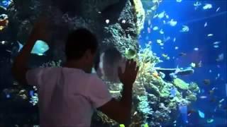 Around us  The largest aquarium in the world