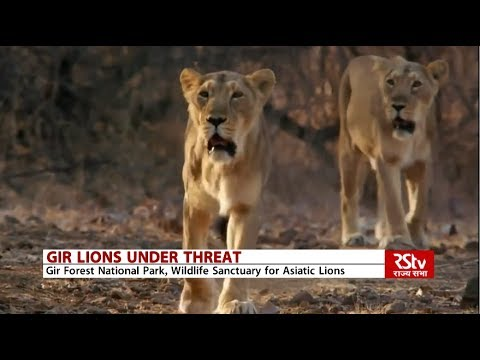 Where all can Asiatic lions be found?